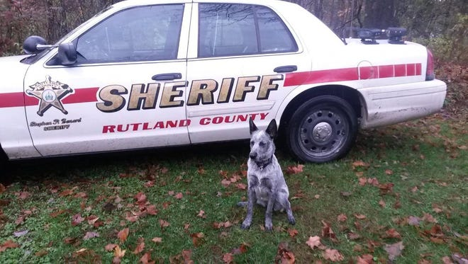 Betcha in front of a Rutland County Sheriff's Office cruiser.