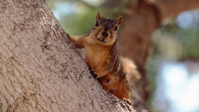 Squirrel - Generic Image