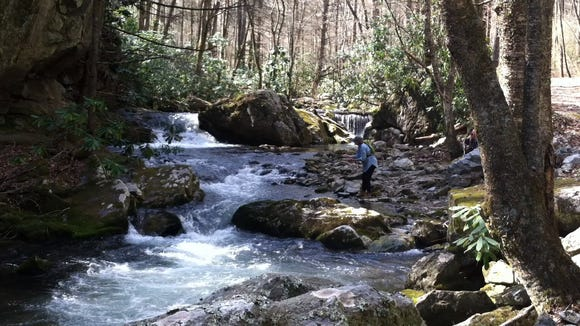 The Southern Appalachian Highlands Conservancy helped