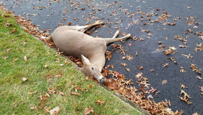 Police had to shoot an injured deer in Plainfield on Monday morning.