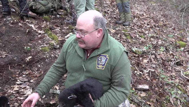 A screen capture shows a Pennsylvania Game Commission employee with a black bear cub.