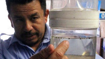 An official with El Paso's Department of Public Health shows mosquitoes captured for testing.