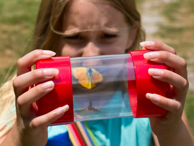 Miranda Desmangle holds a container holding a butterfly she caught during the 11th annual Butterfly Encounter Saturday, July 19, 2014, at Evonikâ??s Tippecanoe Laboratories Wildlife Habitat Area near Lafayette. The event is sponsored by Evonik and the Department of Entomology at Purdue University.