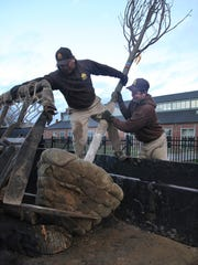 A Tulip Poplar is unloaded for planting in December 2015 at the Kentucky Center for African American Heritage, 1701 W. Muhammad Ali Blvd., in Russell.
