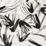 University of South Florida in Tampa opens Zika care center