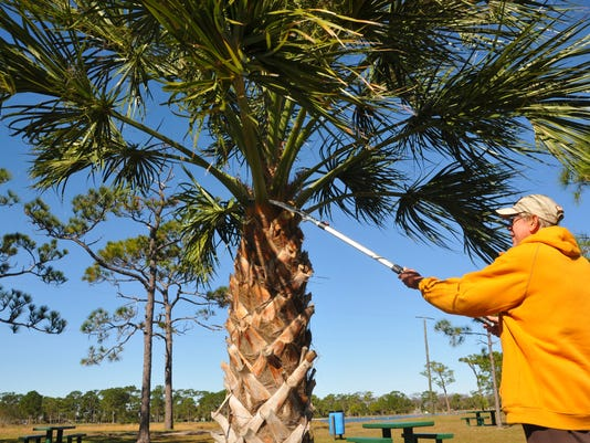 Palm Tree trimming 28