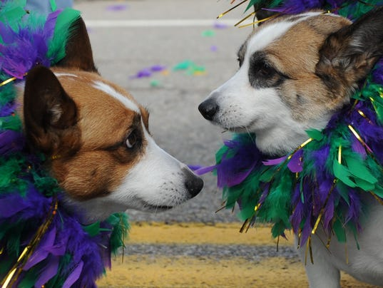Mardi Growl 2016