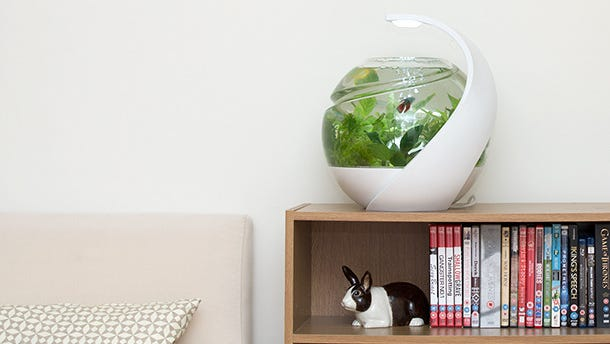 Avo fish tank   A London-based designer has created this sleek, self-cleaning tank for tropical fish. The heated tank includes an LED light and seven removable plant pots that help keep it clean. The downside of this London-based project is the price tag. Supporters who pledge £250 British pounds (about $420) will get an Avo tank and startup kit expected to be delivered in March 2015.