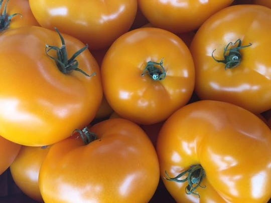 Ledgeview Gardens uses hydroponic gardens to produce tomatoes before traditional home gardens can do so.