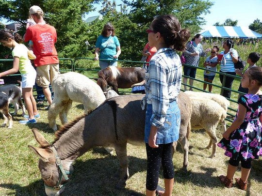 Children got to see farm animals up close during the summer party.