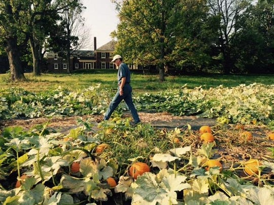 Chuck Gleaves, the executive director of Kingwood Center Gardens, walks through the newest pumpkin patch on property on the southeastern corner of Park Avenue West and Trimble Road, which Kingwood Center owns.