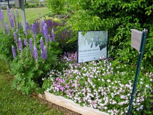 Visit the Trial Gardens at the Ag Center to gain ideas and inspiration for your own garden.