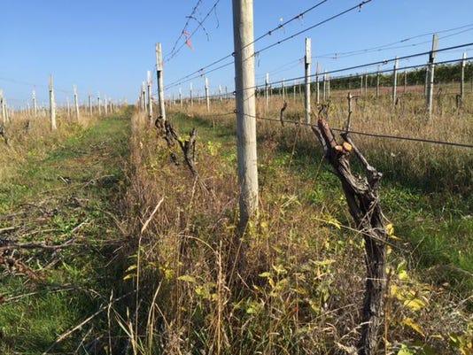 vineyards 1104