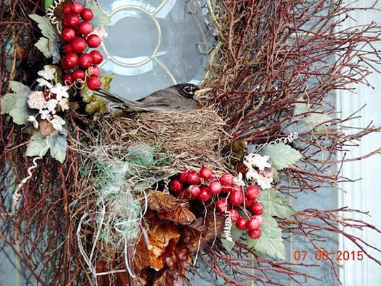 Fran Marple of Manchester Township writes,  A robin nesting in my neighbor s front door wreath.