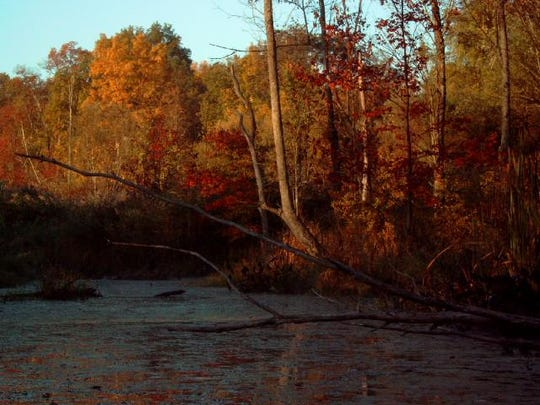 """""""The Great Swamp in Fall"""" by Laurie Wallace."""