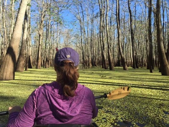 Lake Charlo is deep in the heart of the Cypress Island Swamp. Besides a few derelict duck blinds there are no signs of man.