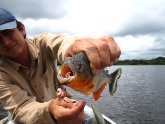 dcn 0413 kiwanis travel film amazon piranha