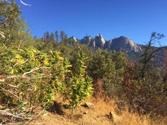 U.S. Forest officials recently busted a marijuana grow site in the Needles area of the Sequoia National forest.