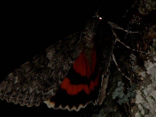 APC 081514 Yard MD BLOG-Moths night out.JPG