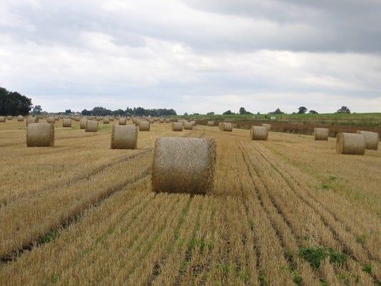 wheatstraw.jpg