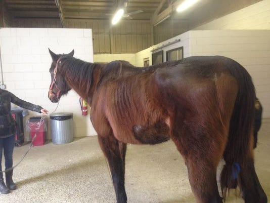 mistreated horse 1.jpg