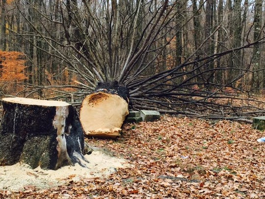Someone cut down a tree estimated to be 120 to 145 years old in a Monroe Township cemetery on Tucker Road. The Richland County Sheriff's Office is investigating.