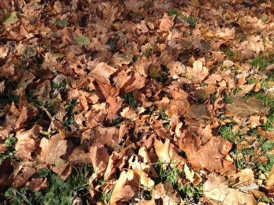 Fall leaves ground.JPG
