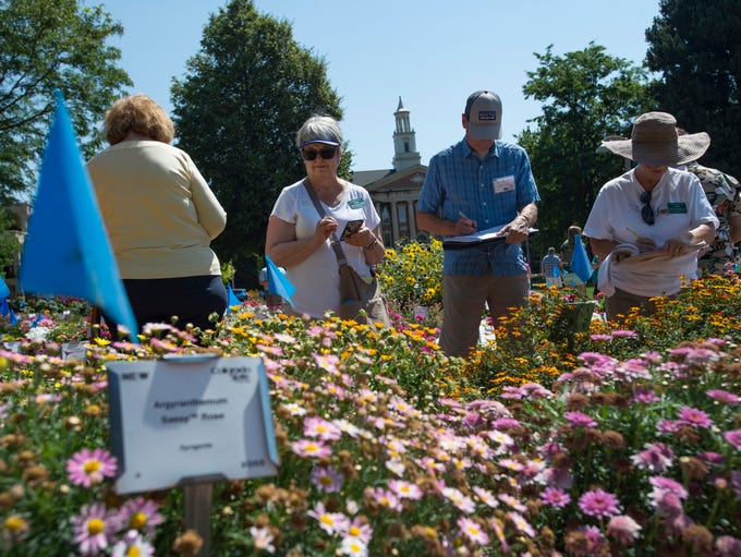 Judges line up to comment on plots of flowers at the