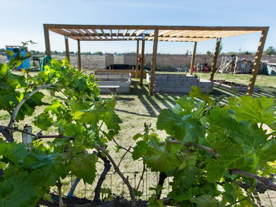 Grapevines and fruit trees grow along the exterior of the Community of Hope garden.