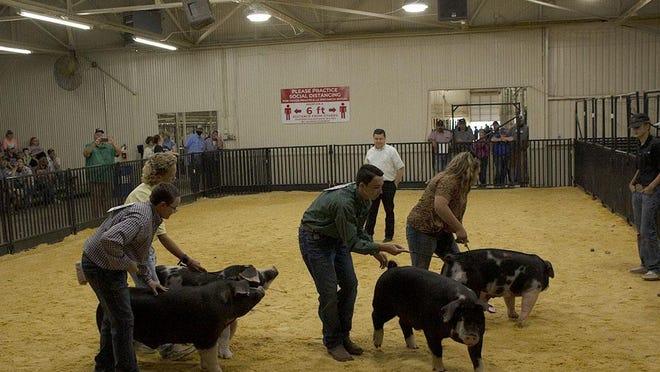 Young livestock raisers and their pigs took center stage Sept. 26 at the Panhandle-South Plains Fair.