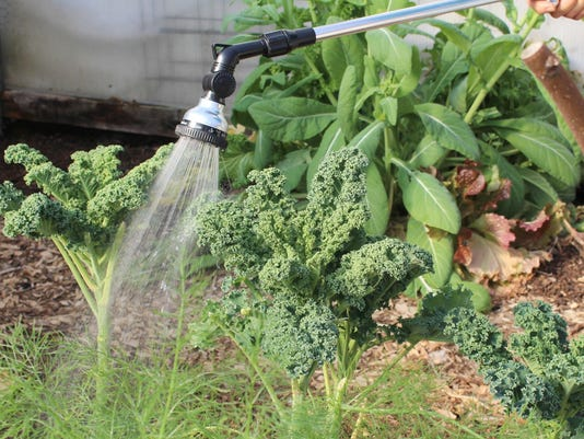 Gardening Column Effective Watering
