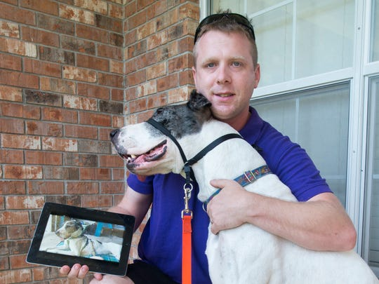 Scott Finley shows a photo of how emaciated Magnolia, or Maggie for short, was when she was found as she snuggles with him at her foster house in Pensacola on Monday, September 19, 2016.   Maggie, who was only around 60 pounds when she was found along the Mississippi-Alabama border and has since gotten back to a healthy 110 pounds, is looking for a permanent home.