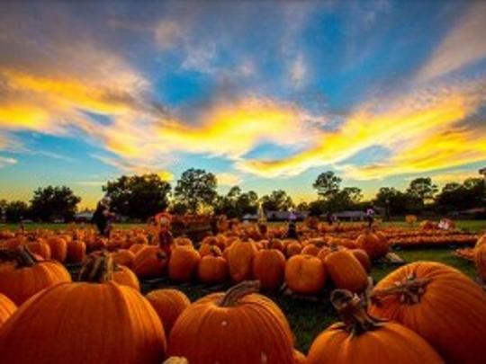 St. Luke's Pumpkin Patch