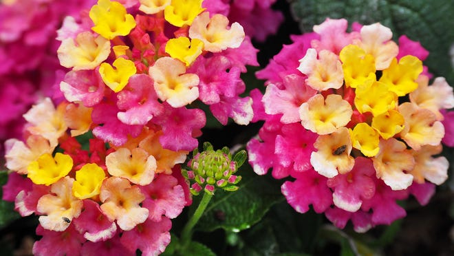 A colorful assortment of flowers and plants have long been part of Dover's history.