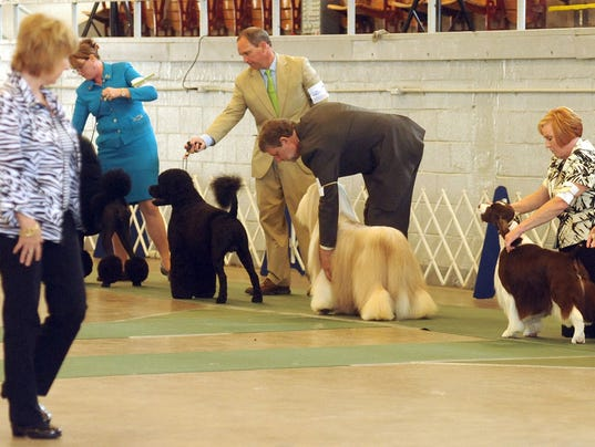 MAR marion dog show