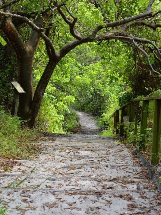 Hiking Trail Nature trail
