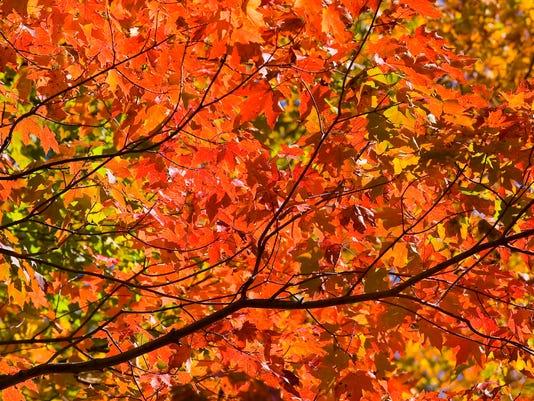 -foliage-25-c3.jpg_20090925.jpg