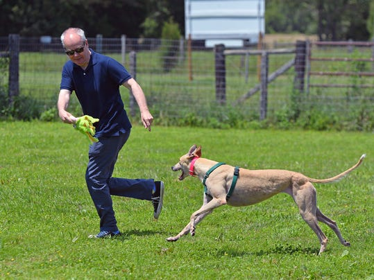 Greyhound Dog Rescue Philadelphia