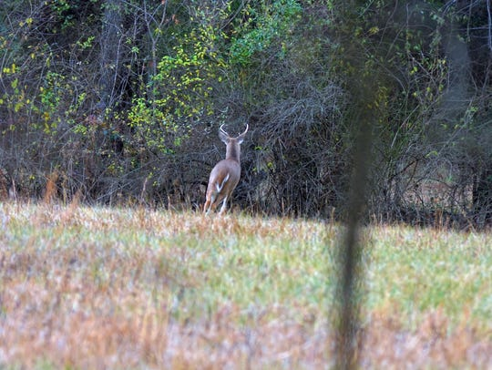 A buck standing in an open field on the first afternoon