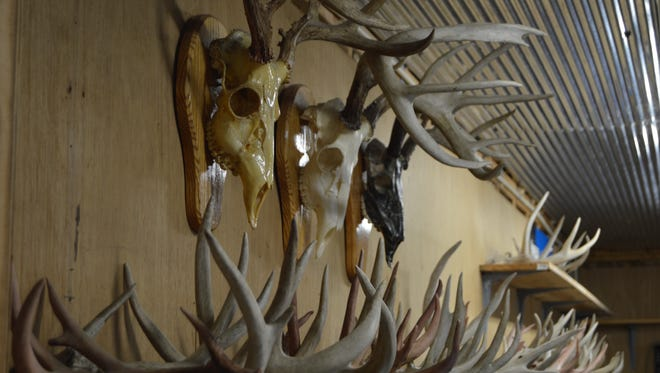 Antlers and skulls hang on display in Rob Remo's garage.