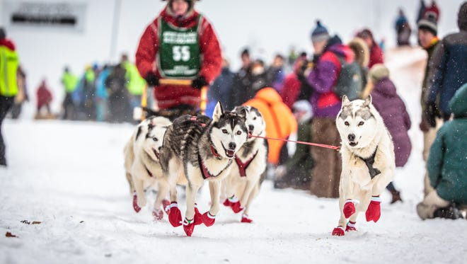 Alice White and her sled dog team race in the Apostle Islands Sled Dog Race.