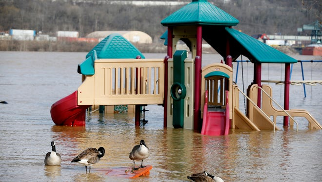 Geese sit on a picnic table at Bellevue Beach Park Tuesday February 20, 2018, as the Ohio River floods the park. The National Weather Service has extended  a flood warning for the river until 1 a.m. Saturday. More rain is expected Tuesday night into Wednesday morning when the river is expected to crest at 56.1 feet and remain above flood stage until Friday.