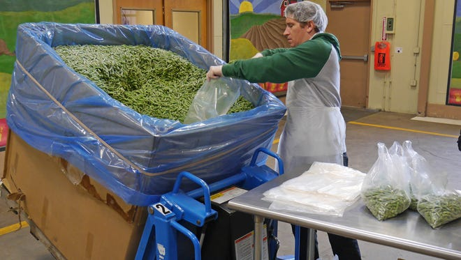 Volunteer Zac Eldredge bags green beans for distribution.