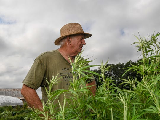 Danny Ford examines the hemp plants on his farm. Maintaining the plants is hard work, and the Ford family is out from sunrise to sunset clearing weeds from each row.