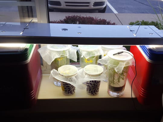 An Oakland County hotel room becomes a makeshift laboratory