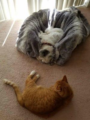 Gemini naps with her brother, Draino