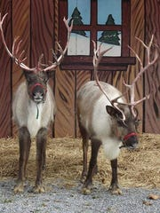 Bridgewater Veterinary Hospital's Holiday Open House on Nov. 27 featured real reindeer.