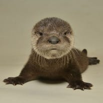 You otter enter this Arizona baby-naming contest