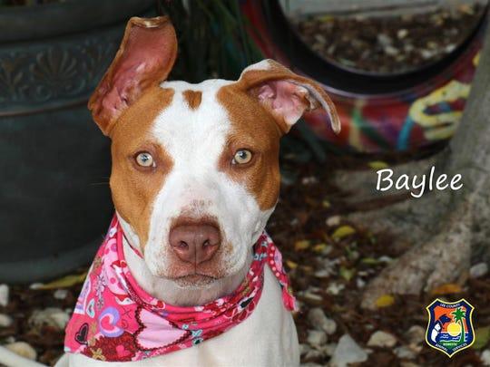Baylee#665423