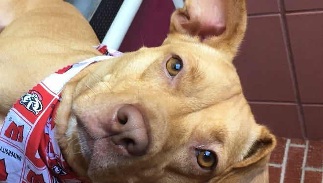 Iris is a friendly gal who loves playing fetch, walks and snuggling with her forever family.